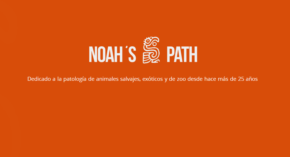 Noahs Path